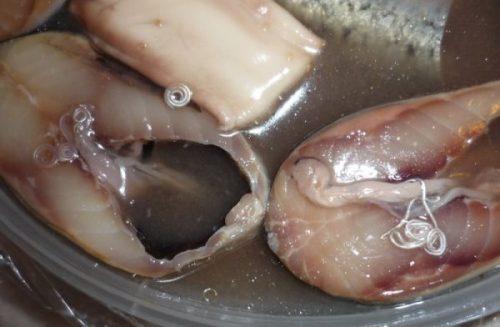 паразиты в рыбе опасные для человека фото