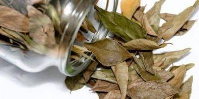 Миниатюра к статье Как чистить сосуды лавровым листом в домашних условиях (отзывы, рецепты)