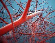 Миниатюра к статье Здоровые и эластичные сосуды: как этого добиться