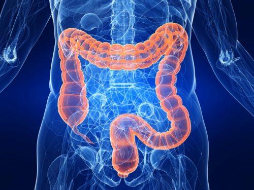 Миниатюра к статье Балантидий кишечный: пути заражения, жизненный цикл, симптомы и лечение