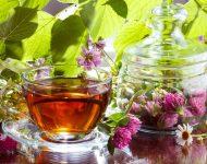 Миниатюра к статье Настойка красного клевера для сосудов: лечебные свойства и противопоказания