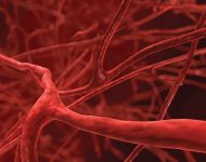 Миниатюра к статье Чем почистить кровеносные сосуды в организме