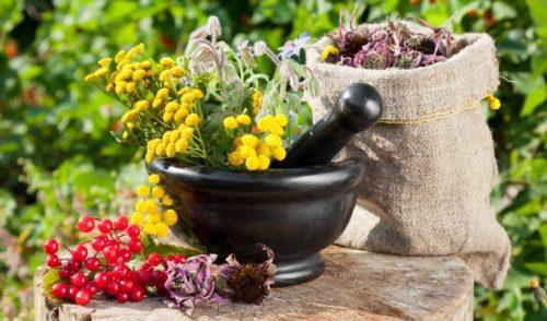 Травы для почек: очищение и лечение
