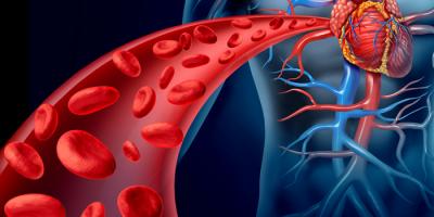 Миниатюра к статье Настойки для очищения крови, кровеносных сосудов и сердца