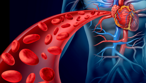 Настойки для очищения крови, сердца и кровеносных сосудов