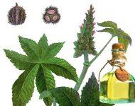Миниатюра к статье Очищение кишечника касторовым маслом: отзывы
