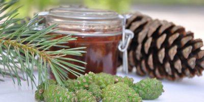 Миниатюра к статье Как готовить и применять настойку на сосновых шишках и водке