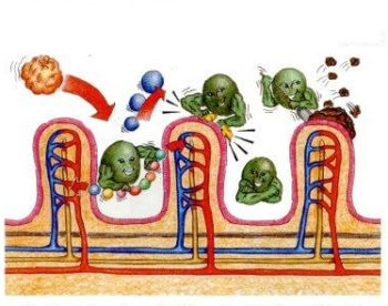 Сироп солодки для похудения. Сироп солодки и энтеросгель - чистка лимфосистемы.