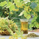 Травы от повышенного холестерина