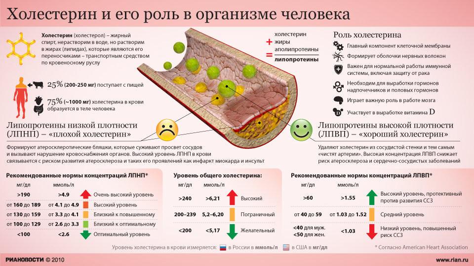 холестерин в организме
