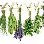 Слабительный сбор трав для очищения кишечника, отзывы