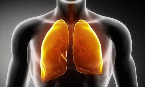 Препараты для очищения легких