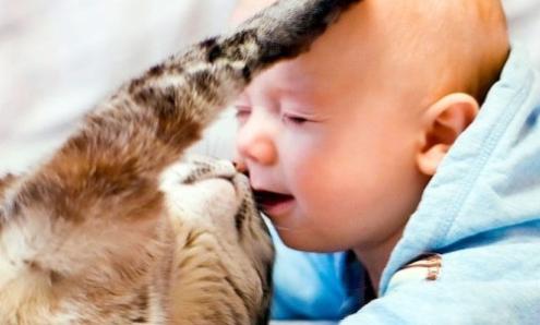 Врожденный токсоплазмоз у новорожденных детей: лечение, диагностика, признаки, причины, симптомы