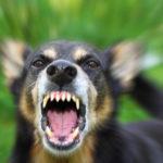 Что делать если укусила собака: симптомы бешенства у человека после укуса собаки, первая помощь, лечение после укуса, сколько заживает рана