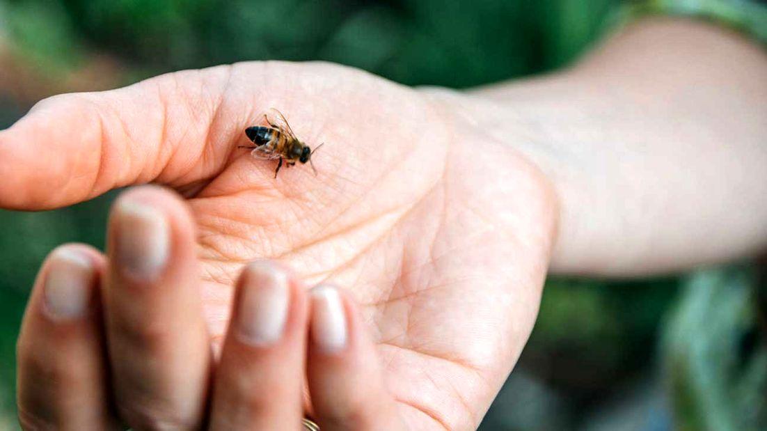 эти любовь картинка ужалила пчела две пластмассовые заглушки