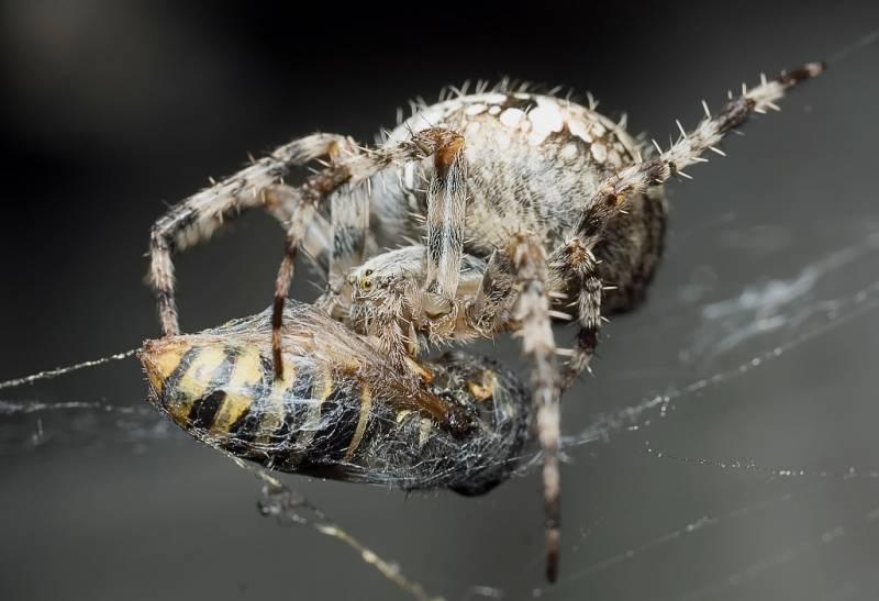 есентаева паук крестовик опасен ли для человека фото сочетании путешествием красивым