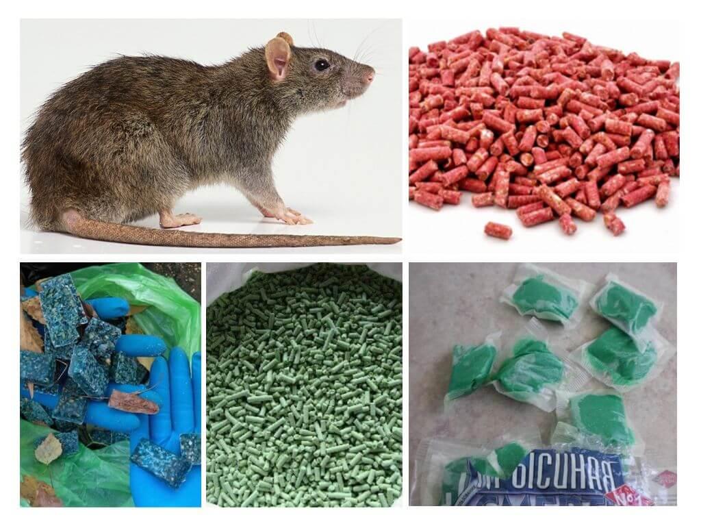 Отравление человека и животных крысиным ядом