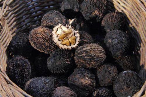 Миниатюра к статье Черный орех: полезные свойства и противопоказания