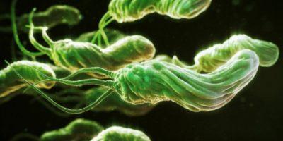 Миниатюра к статье Бактерия Helicobacter pylori может стать причиной вздутия живота