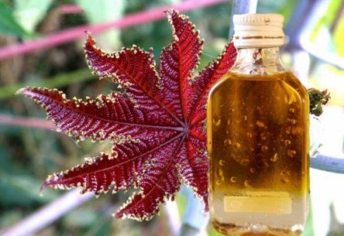 Миниатюра к статье Касторовое масло при запорах: инструкция по применению