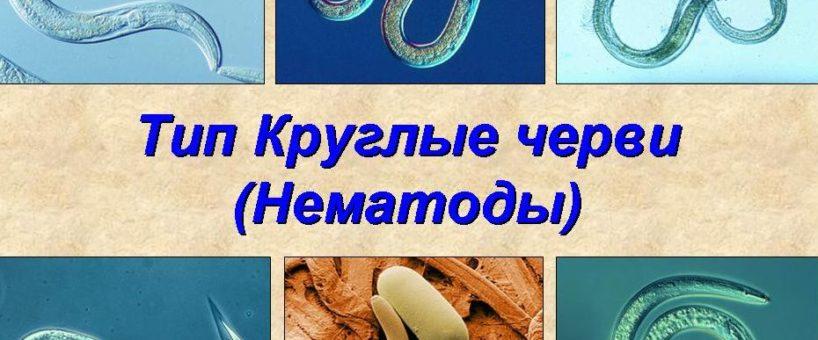 Миниатюра к статье Нематоды (круглые черви) у человека: что это такое, общая характеристика