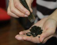 Миниатюра к статье Что такое насвай: последствия употребления наркотика, как бросить употреблять