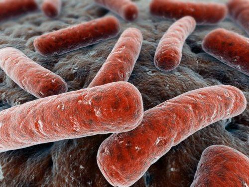 Миниатюра к статье Бактерия клебсиелла пневмония: симптомы и лечение