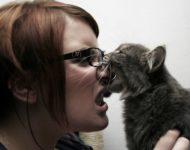 Миниатюра к статье Что делать если укусила кошка: первая помощь и дальнейшее лечение