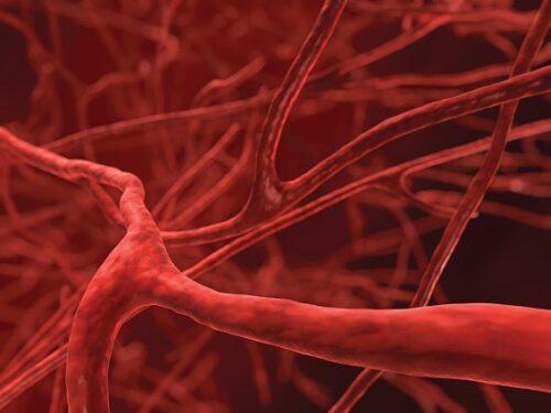Миниатюра к статье Чем очистить кровеносные сосуды в организме