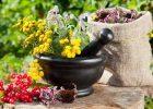 Миниатюра к статье Очищение и лечение почек травами