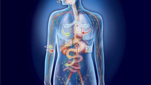 Миниатюра к статье Как очистить организм от токсинов: полезные советы